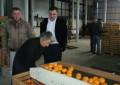 """ნატანებში """"ქართული სუბტროპიკული ხილის კომპანია"""" ამოქმედდა"""