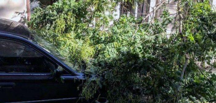 """""""კარფურის"""" მიმდებარედ ქარმა ნაძვის ხე მოგლიჯა, რის შედეგადაც, 3 ავტომანქანა დაზიანდა"""